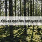 ¡Los Olivos con los bosques de Galicia!